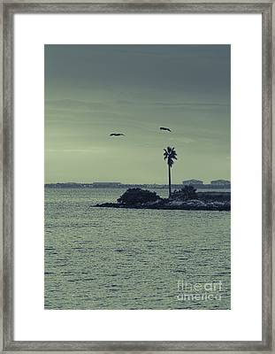 Pelicants And Palm Framed Print by Marvin Spates