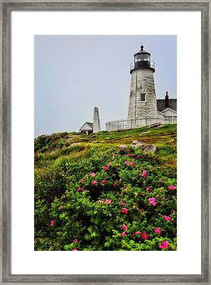 Pemaquid Point Framed Print by Karol Livote