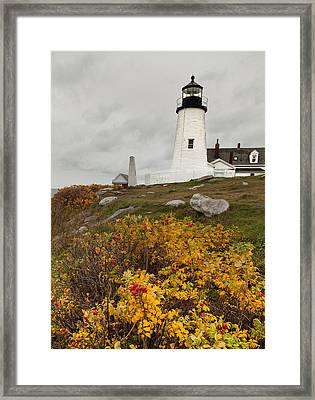 Pemaquid Point Lighthouse And Sea Roses Framed Print
