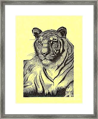 Pen And Ink Drawing Of Royal Tiger Framed Print by Mario Perez