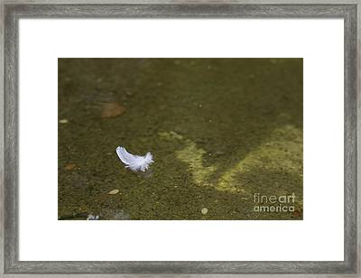 Pen In The Water Framed Print