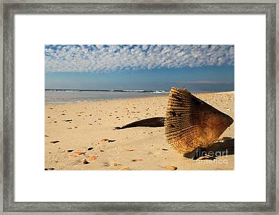 Pen Shell Clam Framed Print by Adam Jewell