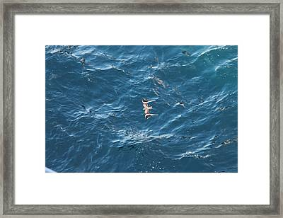 Penant Winged Nightjar 1 Framed Print