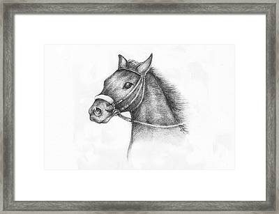 Pencil Drawing Of A Horse Framed Print by Kiril Stanchev