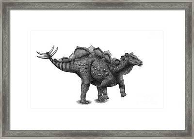 Pencil Drawing Of Wuerhosaurus Homheni Framed Print by Vladimir Nikolov