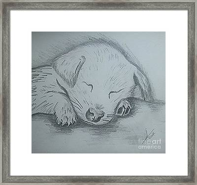 Pencil Puppy Framed Print by Collin A Clarke