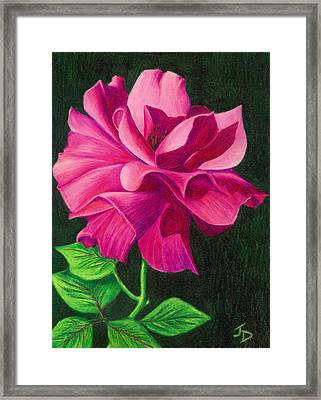 Pencil Rose Framed Print