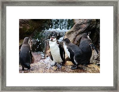Penguin Argument Framed Print by John Rizzuto