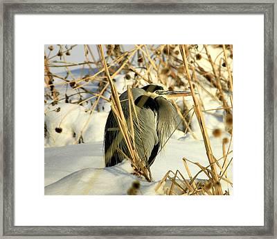 Penguin Heron  Framed Print