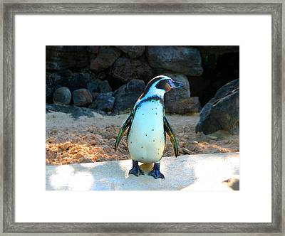 Framed Print featuring the photograph Penguin by Kristine Merc