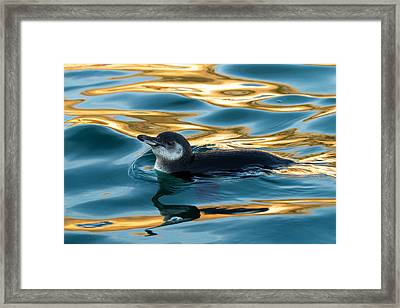 Penguin Watercolor 2 Framed Print