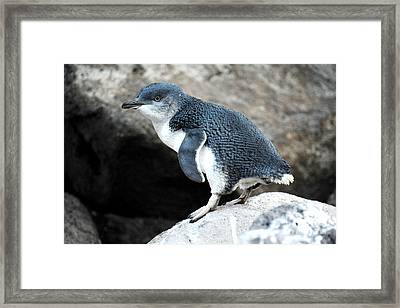 Framed Print featuring the photograph Penguin by Yew Kwang