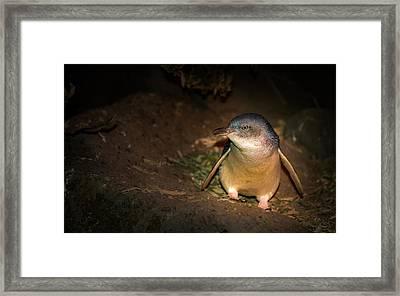 Penguins Framed Print by George Lim