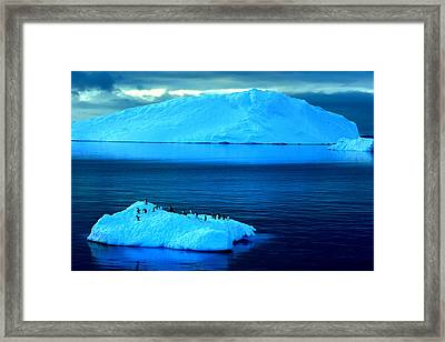 Penguins On Iceberg Framed Print by Amanda Stadther