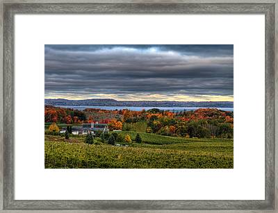 Peninsula Vineyard Framed Print