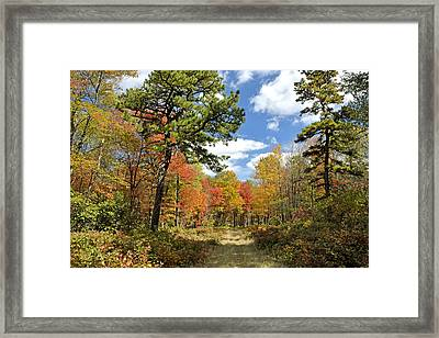 Pennsylvania Forest In Autumn Pocono Mountains Framed Print