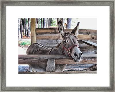 Penny Ann Framed Print