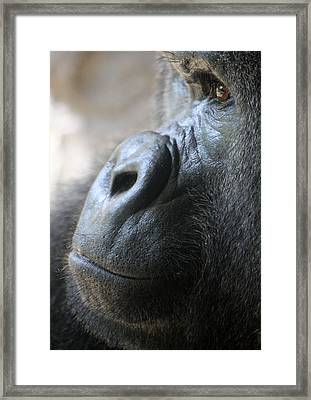 Penny For Your Thoughts Framed Print by David Nicholls