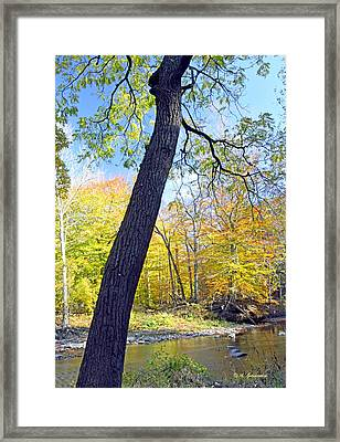 Pennypack Creek In Autumn Philadelphia Landmark Framed Print