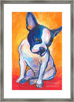 Pensive Boston Terrier Dog  Framed Print