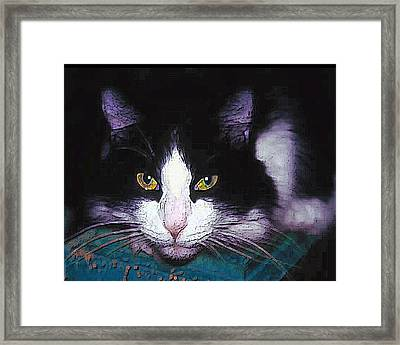 Pensive Cat Framed Print