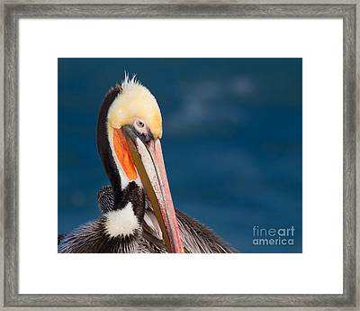 Framed Print featuring the photograph Pensive Pelican by Dale Nelson