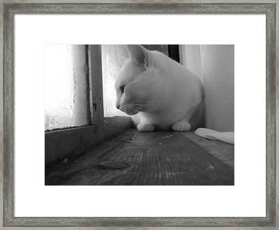 Pensive Snobi Framed Print by James Rishel