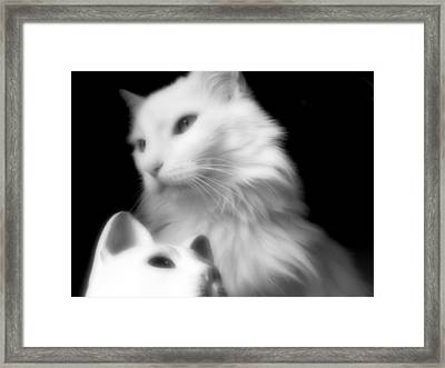 Framed Print featuring the photograph Pensive Turkish Angora by Aurelio Zucco