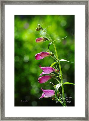 Penstemon Framed Print