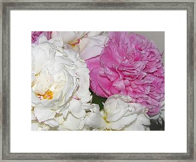 Framed Print featuring the photograph Peonies 11 by Margaret Newcomb