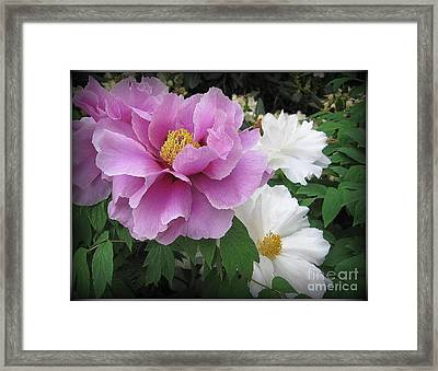 Peonies In White And Lavender Framed Print by Dora Sofia Caputo Photographic Art and Design
