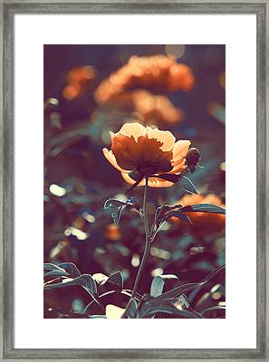 Peonies  Framed Print by Jon Baldwin  Art
