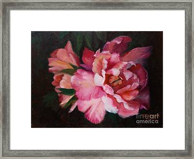 Peonies No 8 The Painting Framed Print by Marlene Book