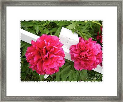 Framed Print featuring the photograph Peonies Resting On White Fence by Barbara Griffin