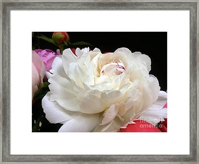 Peony Addiction Framed Print by Heather L Wright