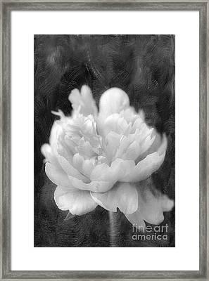 Peony  Black And White Framed Print