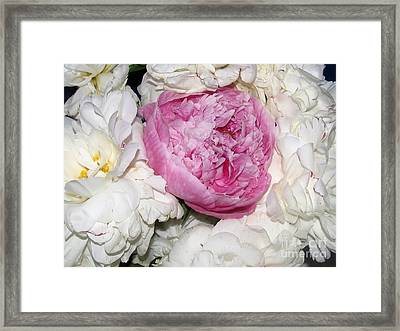 Framed Print featuring the photograph Peony Bouquet 13 by Margaret Newcomb