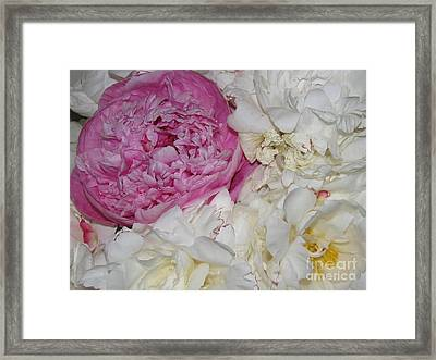 Framed Print featuring the photograph Peony Bouquet 14 by Margaret Newcomb