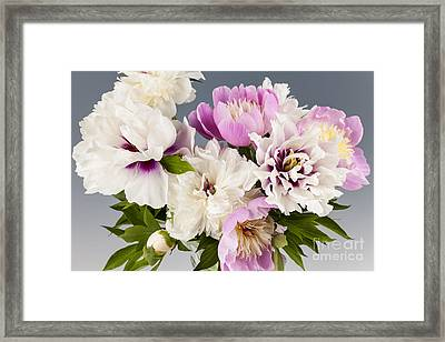 Peony Flower Bouquet Framed Print by Elena Elisseeva