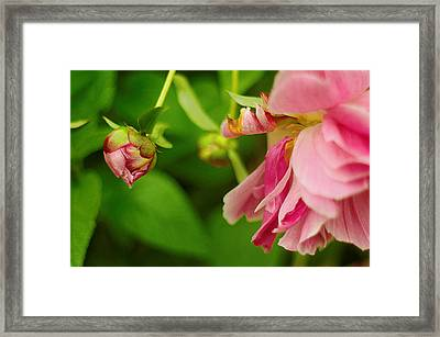 Framed Print featuring the photograph Peony Flower With Bud by Suzanne Powers