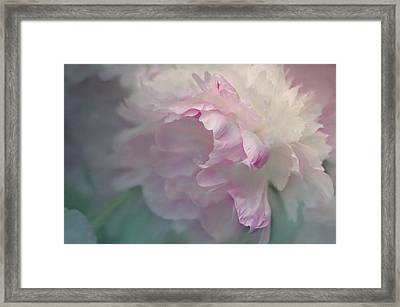 Peony Framed Print by Jeff Burgess