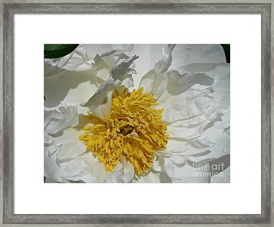 Peony Perfection Framed Print by Avis  Noelle