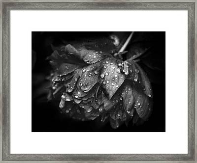 Refreshed Framed Print by Jessica Jenney