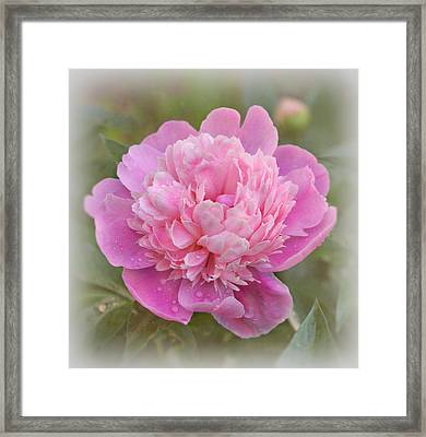 Peony - Pink Framed Print by Sandy Keeton