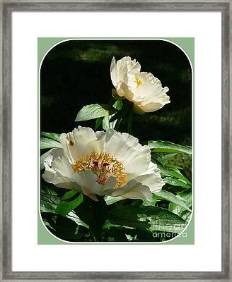 Peony Pleasure Framed Print by Avis  Noelle