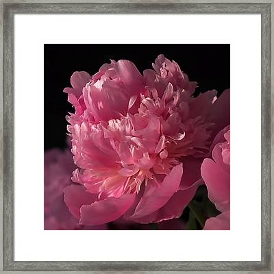 Framed Print featuring the photograph Peony by Rona Black