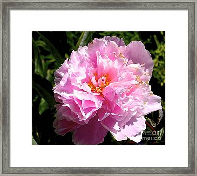 Framed Print featuring the photograph Peony by Sher Nasser