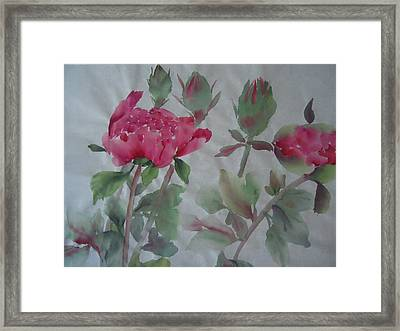 Peony010 Framed Print by Dongling Sun