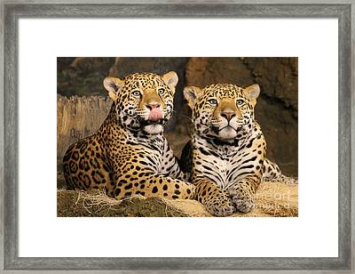 People Look Tasty. Framed Print by Eric Curtin