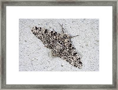 Peppered Moth Framed Print by Power And Syred
